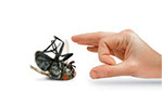 Pest Xpress. Image of hand flicking away dead fly.